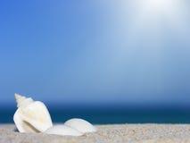 Seashells en la playa Imagenes de archivo
