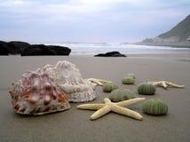 Seashells en la playa fotos de archivo libres de regalías