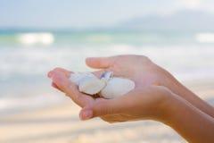 Seashells en manos Imagen de archivo libre de regalías
