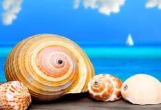 Seashells en muelle Imagen de archivo