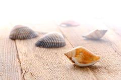 Seashells en muelle de madera mojado en luz suave del amanecer de la niebla Imágenes de archivo libres de regalías