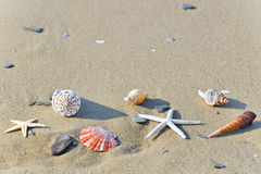 Seashells en sable photo libre de droits