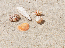 Seashells en sable photographie stock