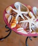 Seashells en un florero Fotos de archivo libres de regalías