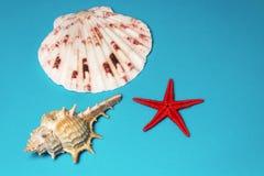 Seashells en un fondo azul Foto de archivo