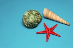 Seashells en un fondo azul Imagenes de archivo