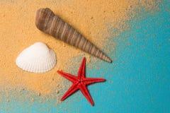 Seashells en un fondo azul Fotos de archivo
