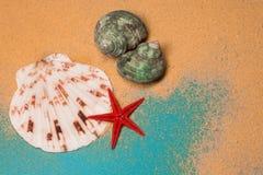 Seashells en un fondo azul Imagen de archivo