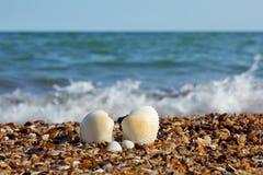 Seashells en una playa Foto de archivo libre de regalías