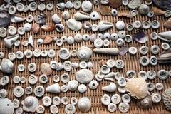 Seashells en varias tallas imágenes de archivo libres de regalías
