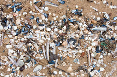 Seashells on the English Channel beach. Normandy, France. Royalty Free Stock Photo