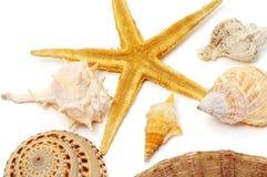 Seashells et étoiles de mer photo stock