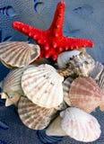 Seashells et étoiles de mer photographie stock libre de droits