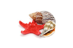 Seashells et étoiles de mer Images stock