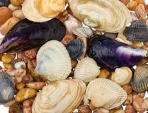 Seashells et pierres image libre de droits