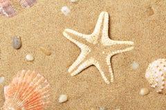 Seashells et un mensonge d'étoiles de mer sur le littoral Photos stock