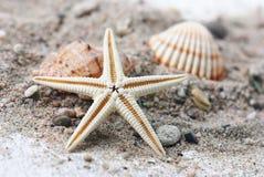 Seashells et une étoile de mer image stock