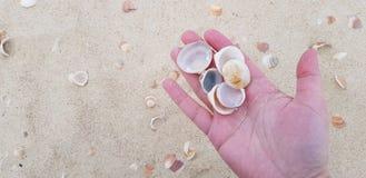 Seashells on female palm stock photos