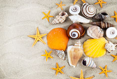 Seashells. Stock Image