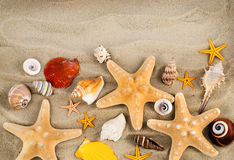 Seashells. Stock Photos