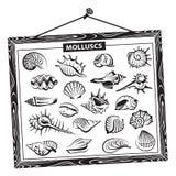Seashells fijados Fotografía de archivo libre de regalías