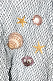 Seashells on fishing net Royalty Free Stock Photography