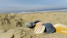 Seashells 1. Seashells in the foreground , the beach of Den Haag and the North Sea in the background stock photo