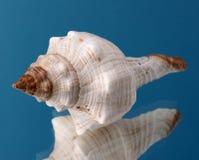 Seashells frame. Good for background Royalty Free Stock Photo