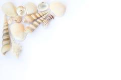 Seashells frame. Different seashells isolated over white background Stock Photos