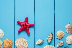Seashells frame on blue wood background. Summer background , Seashells on blue wooden background , Seashells on light blue background Stock Photos