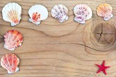 Seashells frame on old wood Stock Images