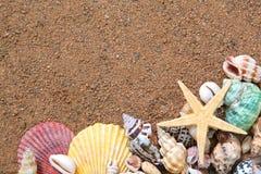 Seashells frame on sand. Summer concept. seashells frame on sand background Royalty Free Stock Photos