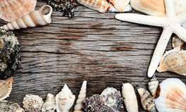 Seashells frame on wooden background Royalty Free Stock Photography