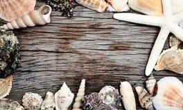 Seashells frame on wooden background. Seashells frame on grunge wooden background royalty free stock photography