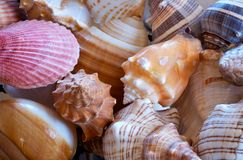 Seashells Galore. Pile of beautiful seashells, in pstel tones with one pink one standing out royalty free stock images