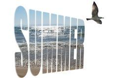 Seashells gestalten auf Sandhintergrund Stockfotografie