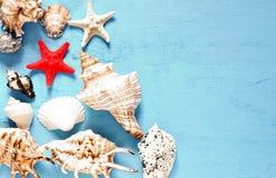 Seashells gestalten auf Sandhintergrund Seeshells auf einem blauen Hintergrund lizenzfreies stockbild