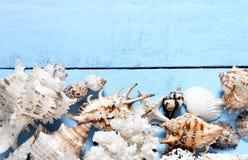 Seashells gestalten auf Sandhintergrund Seeshells auf einem blauen Hintergrund stockfotos