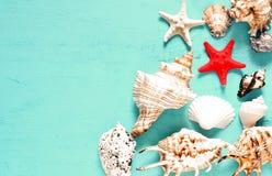 Seashells gestalten auf Sandhintergrund Seeshells auf einem blauen Hintergrund lizenzfreie stockbilder