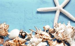 Seashells gestalten auf Sandhintergrund Seeshells auf einem blauen Hintergrund stockbilder