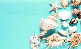 Seashells gestalten auf Sandhintergrund Seeshells auf einem blauen Hintergrund stockfoto