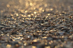Seashells in the glare of of sunset Stock Images