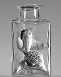 Seashells in a glass jar. Monochrome still life of seashells in a thick glass jar royalty free stock images