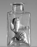 Seashells in a glass jar. Monochrome still life of seashells in a thick glass jar Royalty Free Stock Images