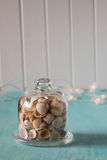 Seashells  in glass mini dome. Lights on the background. Stock Photo