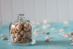 Seashells  in glass mini dome. Lights on the background. Stock Image