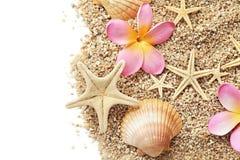 Seashells granica Obrazy Stock