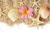 Seashells granica Zdjęcie Royalty Free
