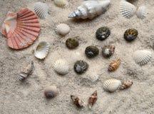 Seashells on gray sand - selective focus Royalty Free Stock Photos