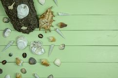 Seashells on green wooden background royalty free stock photos